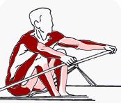 rudernmuskelgruppen